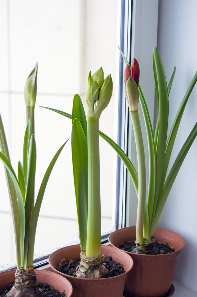 hous plants improving indoor air quality